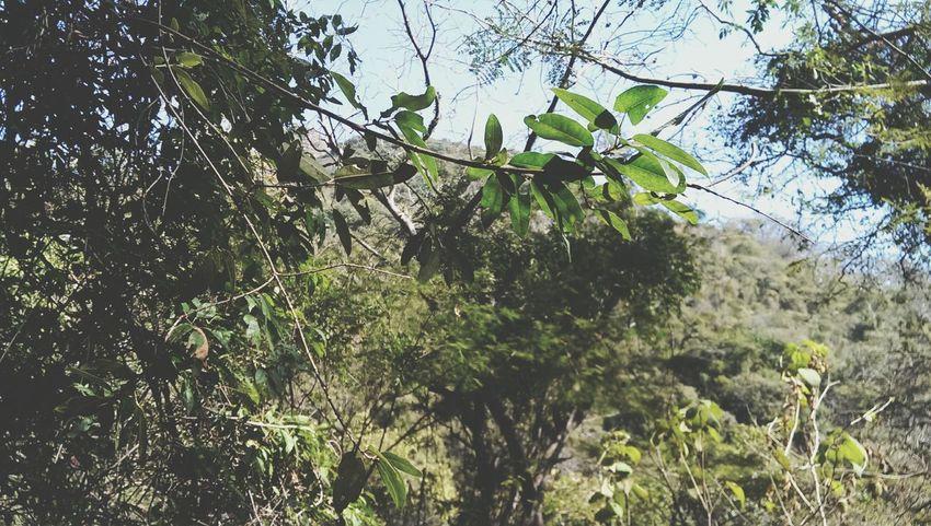 Verdes Plantas, Bosque Explora