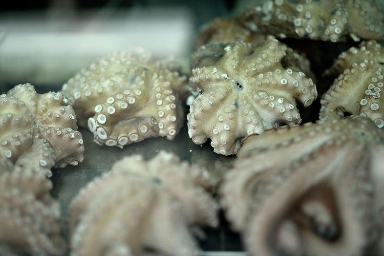oktupus Fish