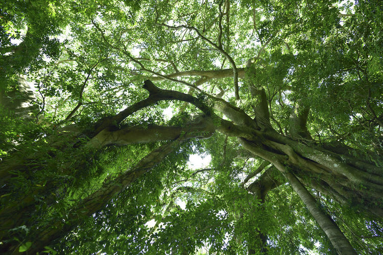 Beauty In Nature Branch Day Forest Green Color Growth Low Angle View Nature No People Outdoors Scenics Sky Tranquility Tree 台東 台灣 壯觀 巨木 成長 氧 綠色 芬多精 葉子
