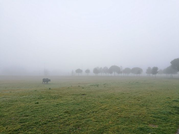 Fog Nature Tranquility Foggy Weather Beauty In Nature Landscape Tranquil Scene Tree Rain Idyllic Scenics Agriculture Winter No People Outdoors Cold Temperature Sky Day Bufalo