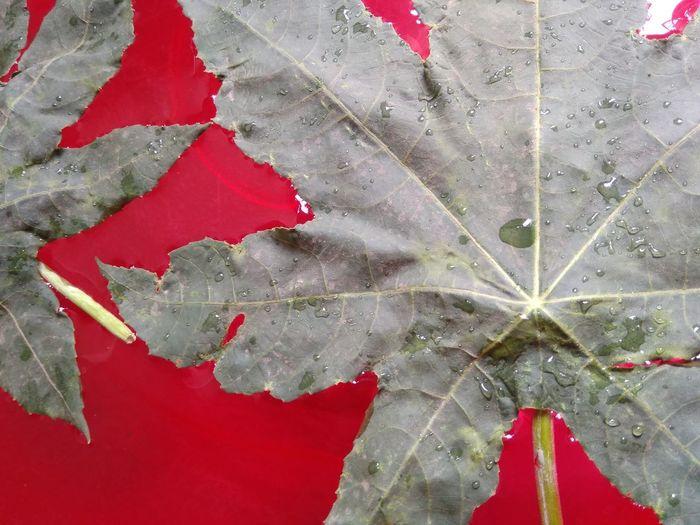 Leaf Green Leaf