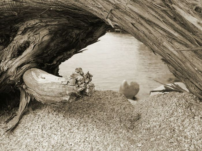 Sea_collection Nature EyeEm Sea Collection EyeEm Nature Collection EyeEm Gallery Sardinia,italy Sea Eyeem Sea Rocks And Water Trunk Tree Trunk In The Water Sepia Sepia Photography Sepia_collection Sepiaphoto EyeEm Sepia_Collection Eyeem Sepia EyeEm Nature Lover Sardinia Sardegna Italy  Sardegna Sardinia EyeEm Sea Lovers Trunk Eye4photography  Eyeem Photography