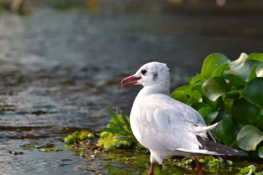 Bird Bird Photography OpenEdit Showcase: February