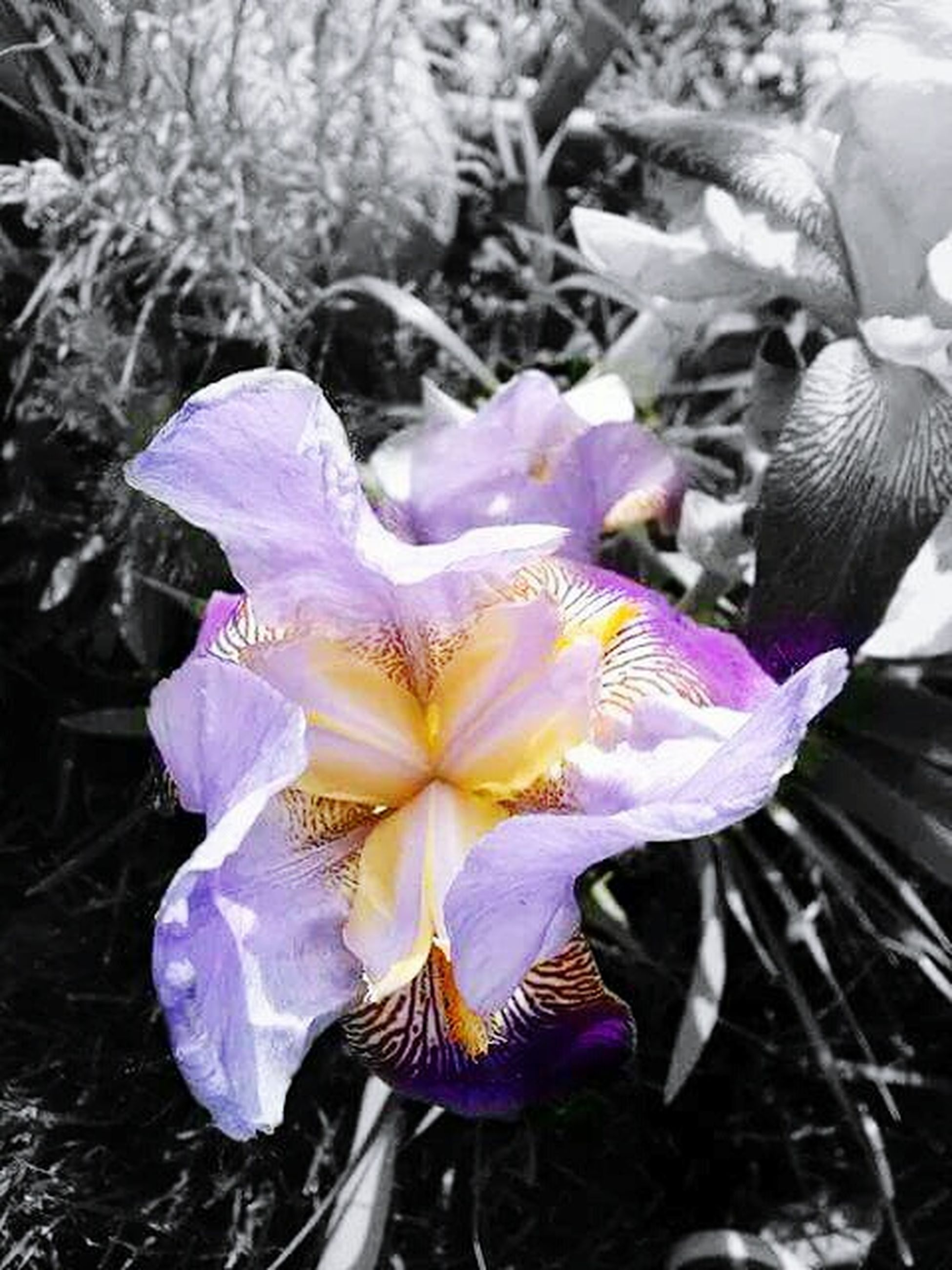 flower, purple, petal, fragility, flower head, close-up, beauty in nature, freshness, nature, focus on foreground, growth, blooming, plant, natural pattern, pollen, high angle view, no people, single flower, day, outdoors
