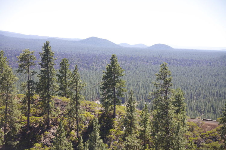 Beauty In Nature ❤️❤️ Bend Clear Sky Green Nature Oregon Site Seeing Skyline Trees Beautiful Oregon Beauty In Nature Day Forest Landscape Lava Butte Lava Rocks Mountain Natures Beauty No People Outdoors Scenics Sky Tranquility Tree Woods
