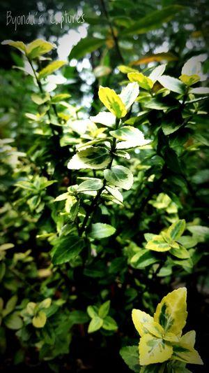 Leaf Green Color Plant Nature Close-up Growth Day No People Outdoors Amateurshot 2017 Byondascaptures