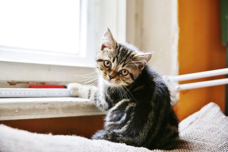 Portrait of cute kitten by window at home