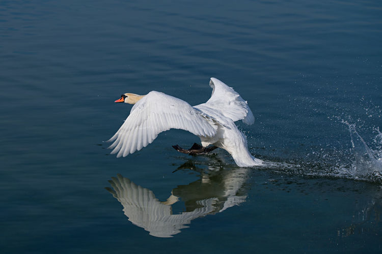 View of a bird flying over calm lake