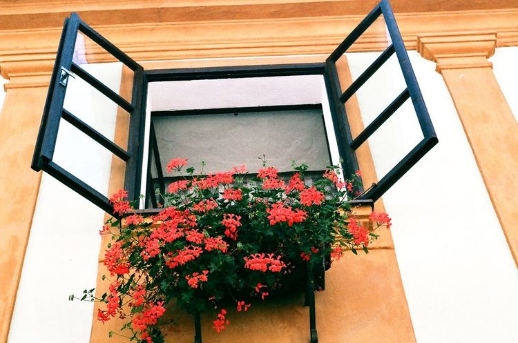 Vintage windows in the Czech Republic European  Europe Český Krumlov Prague Vintage Architecture Vintage Czech Republic Flower Growth Architecture Plant Nature No People Blooming Window Box Beauty In Nature Day Outdoors Freshness