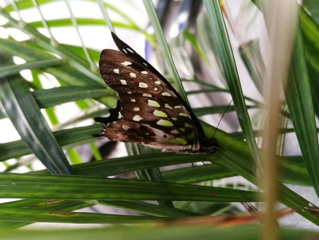 Butterfly Beauty In Nature Green Color Nature Insect Zoology Zikayzander First Eyeem Photo Colours Colour Of Life Green Plant Animal Themes Hello World