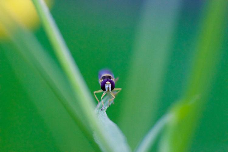Purple Bee On Plant