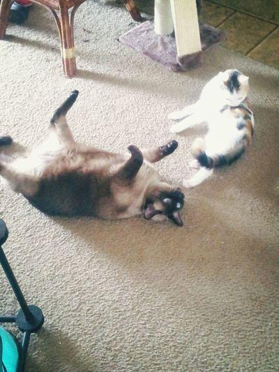My babies Cats Enjoying Life