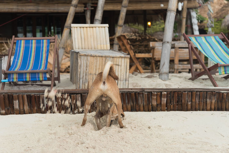 Dog Digging Sand At Beach