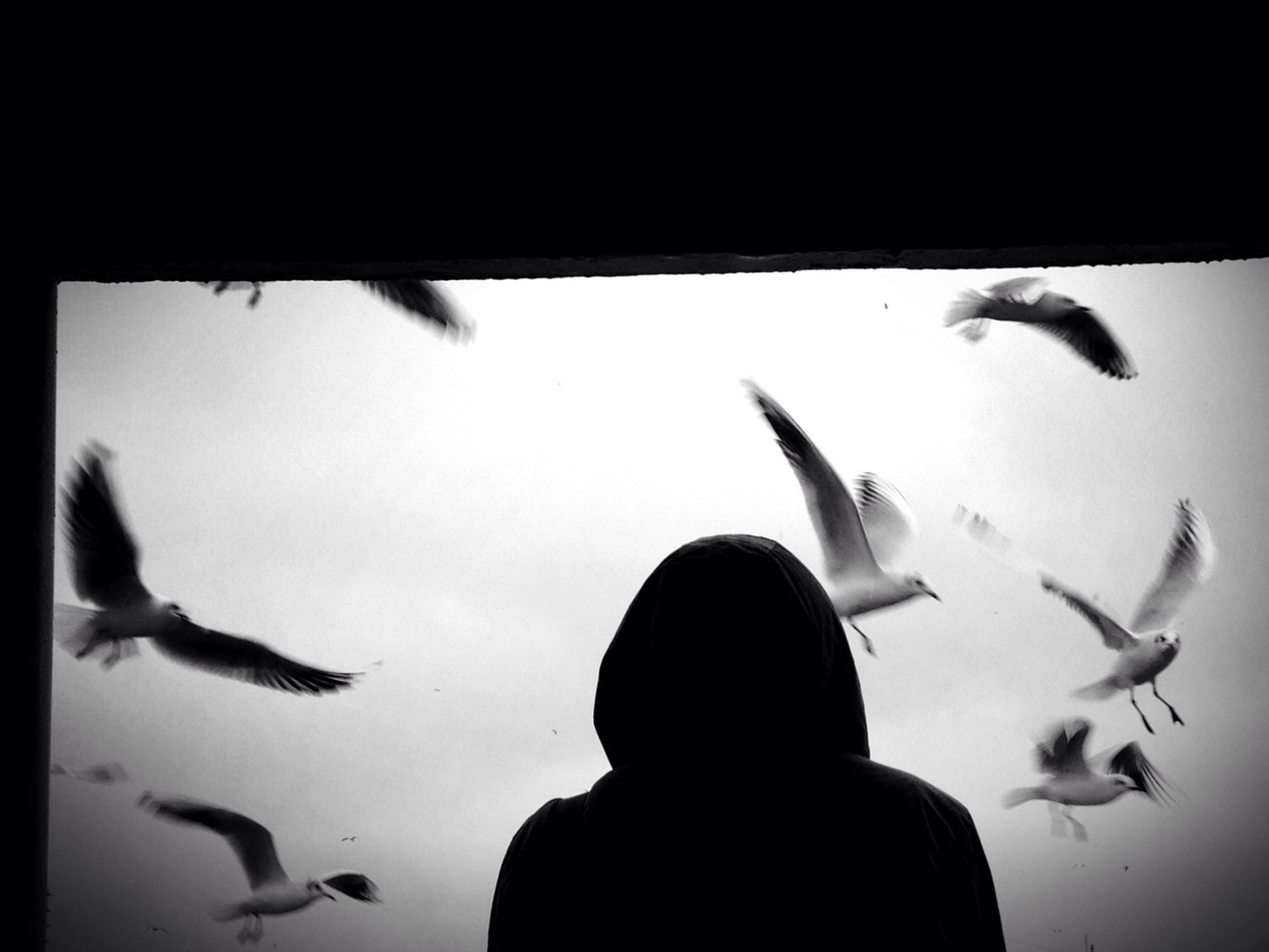 wildlife, animals in the wild, indoors, bird, animal themes, transfer print, flying, auto post production filter, silhouette, glass - material, person, transparent, lifestyles, flock of birds, fish, men, pigeon