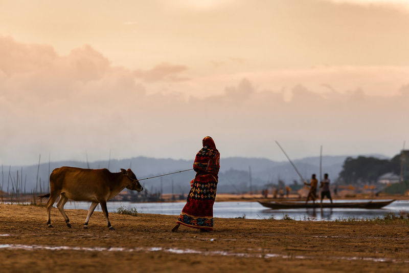 Woman With Cow While By Lake Standing Against Sky During Sunset