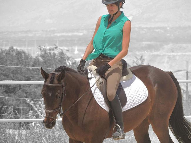 Braided Hair Braids Horse Horses Horsesofinstagram Mare Mare ❤ Turquoise