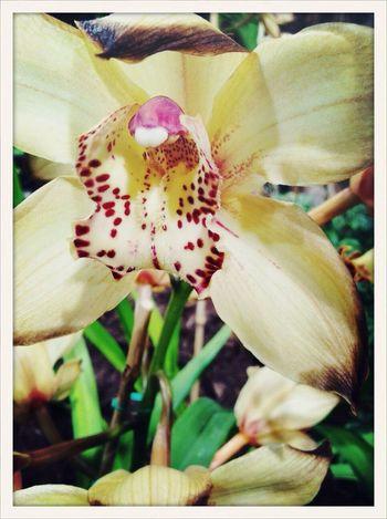 Orchid AMPt_community Flower Exhibition AMPt_ Community