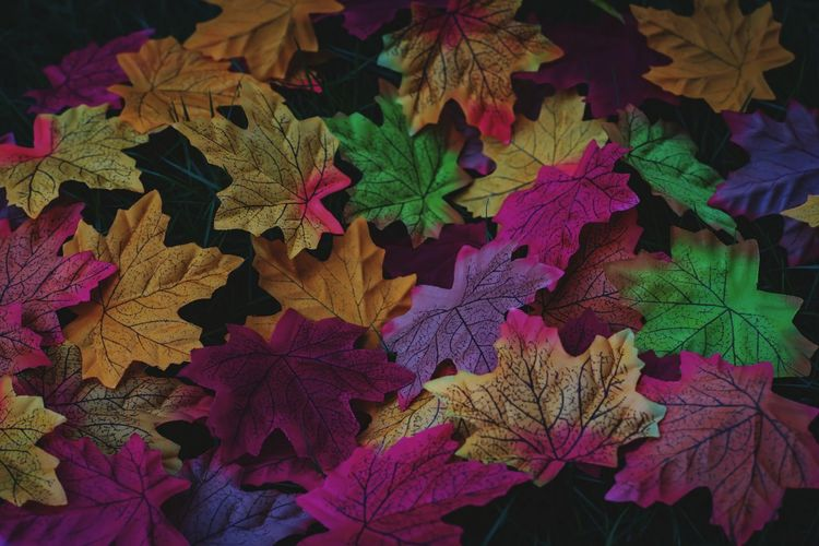 High angle view of colorful leaves
