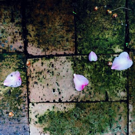 Project 365 Fallen Flower Petals Bricks IPhoneography taken with iPhone 6 using Camera+, IPad Edit using Filterstorm Neue