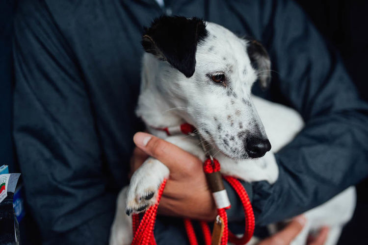Adult Adults Only Animal Animal Themes Bonding Care Close-up Day Dog Domestic Animals Friendship Holding Human Body Part Human Hand Indoors  Jack Russell Leash Mammal One Animal One Person People Pet Owner Pets Puppy Vet