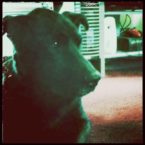 My BUDDY. MISS HIM SO MUCH