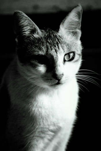 Domestic Cat One Animal Pets Close-up Animal Themes Portrait Cat No People Domestic Animals Indoors  Day First Eyeem Photo Pet Portraits