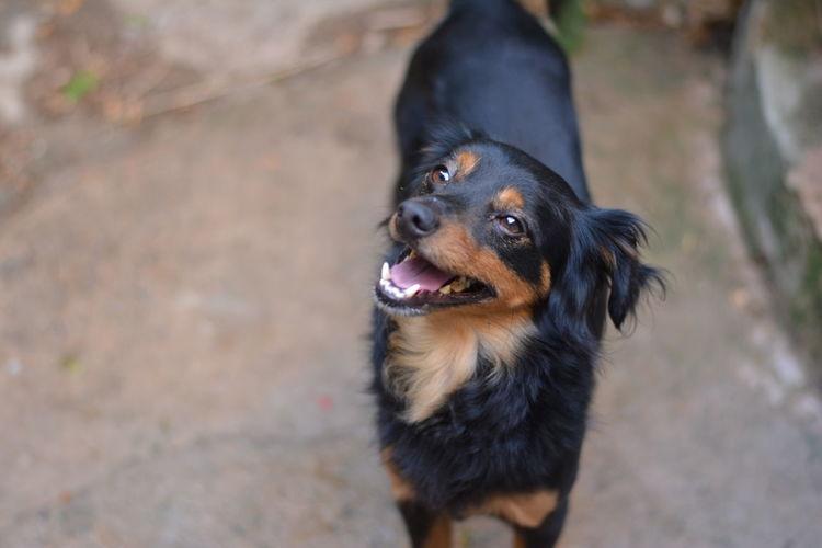 Beatiful Dog Beatiful View Black Dog Char Dog From Above Little Dog Model Dog My Year My View Perro Ratero De Mallorca Pretty Dog Small Dog