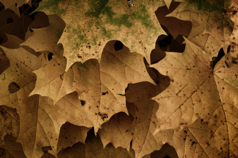 High angle view of dry autumn leaves