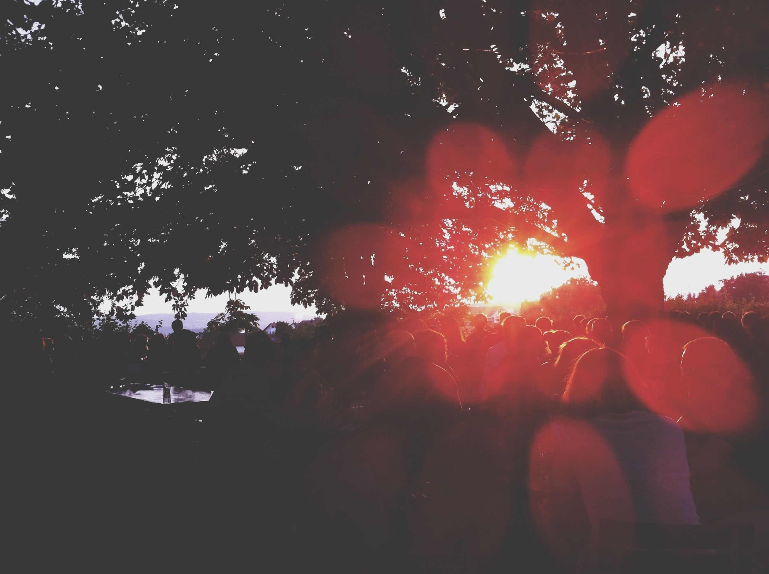 tree, silhouette, branch, sunset, sunlight, sun, low angle view, nature, orange color, sunbeam, growth, lens flare, outdoors, tranquility, beauty in nature, sky, back lit, tree trunk, scenics, no people
