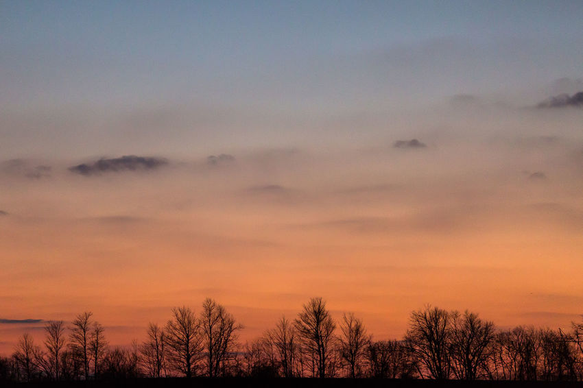 sunset sky with a row of trees on a rural field Tree Cold Temperature Sunset Bare Tree Winter Rural Scene Agriculture Field Snow Idyllic Dramatic Sky Silhouette Atmospheric Mood Treetop