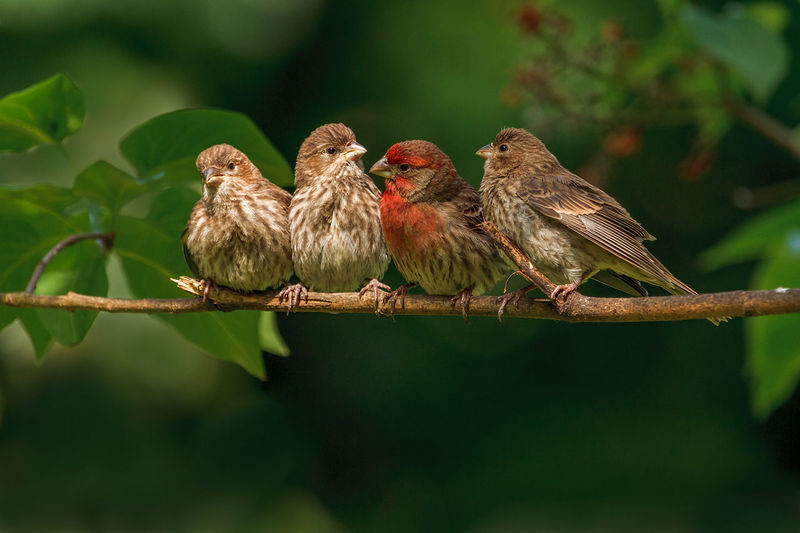 Bird Perching Togetherness Close-up Plant Animal Themes Mourning Dove Branch Young Bird Duckling Dove - Bird Koala Owl Bare Tree Foraging Baby Chicken Bird Nest Animal Nest Tree Trunk Cygnet Tropical Bird Woods Nest Gosling Chick Coot