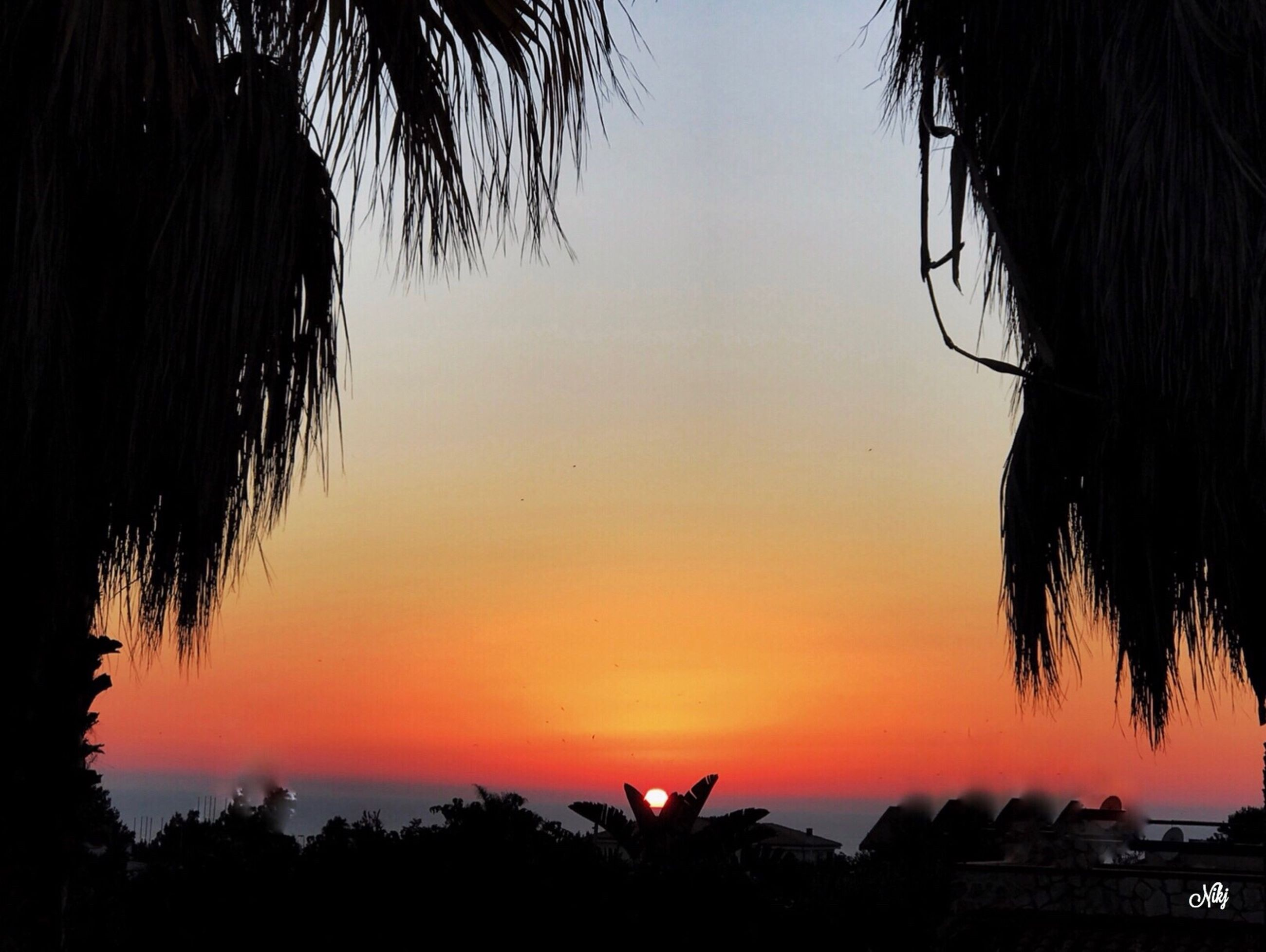 sunset, silhouette, orange color, tree, sky, nature, beauty in nature, scenics, outdoors, no people, animal themes, day
