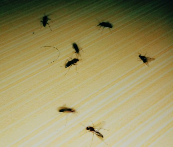 Insect Colony Large Group Of Animals