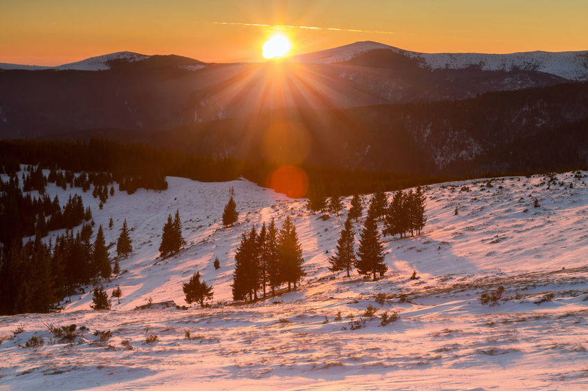 Winter sunset in Parang Mountains, Ranca - Romania Carpathians Mountains Romania Trees Forest Landscape Mountain Nature Pine Tree Ranca Romania Scenics Sky Snow Sun Sunlight Sunrise Sunset Tree Winter