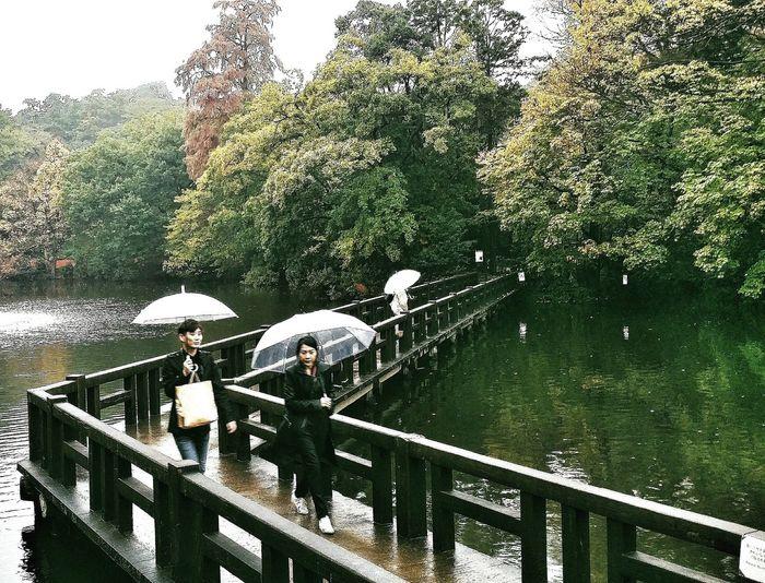Inokashira Park Bridge Wooden Autumn Colours Fall 秋 Autumn 2015 Tokyoautumn2015 Nature Naturelover Naturecollection Naturephotography Tokyonature Urbannature Tokyo Japan Travel Photography