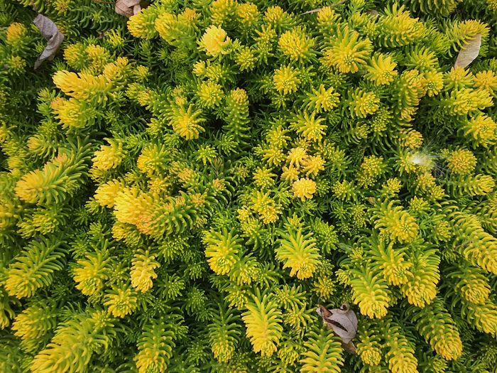 Nature Plant Growth Outdoors Beauty In Nature Day Nature Photography Nature Yellow Plants Fall Winter