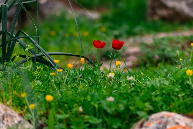 Nikon Flower