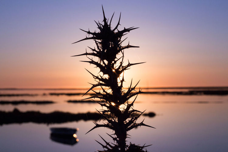 Silhouette tree against clear sky at sunset