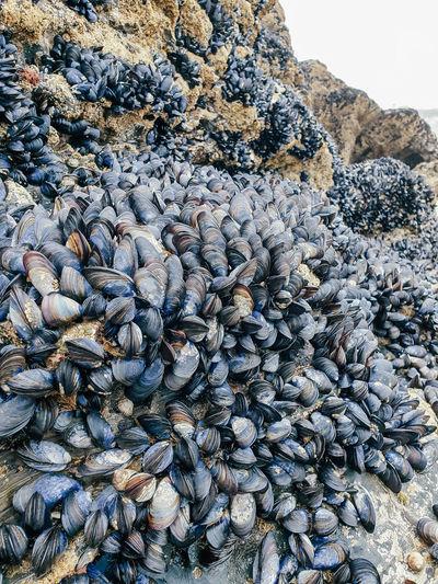 Full frame shot of shells on rock
