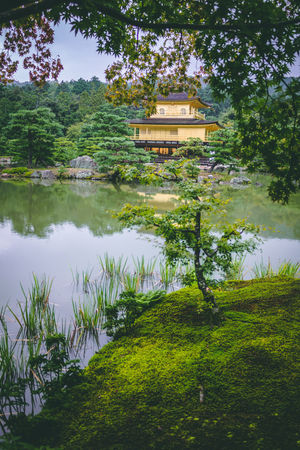 Golden Temple Kinkakuji Kinkakuji Temple Kinkaku-ji Golden Pavilion Pavilion Kinkaku-ji Kinkaku-ji Temple Kinkakuji Temple, Kyoto Golden Pavilion  Goldentemple Kyoto Kyoto, Japan EyeEm Selects Gold Golden Temple Japan Water Tree Reflection Nature Lake No People Green Color Beauty In Nature Sky Day Outdoors
