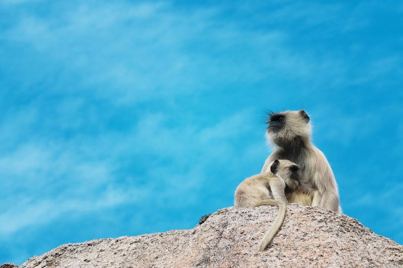 Low angle view of monkey sitting on rock