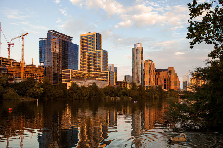 City covered in evening golden light, and a dog swimming Austin Texas Cityscape Dog Swimming Modern Architecture Building Exterior Built Structure City Cloud - Sky Crane - Construction Machinery Development Dog Glass Golden Hour Lake Nature Outdoors People Reflection Sky Skyscraper Tree Urban Landscape Water Waterfront