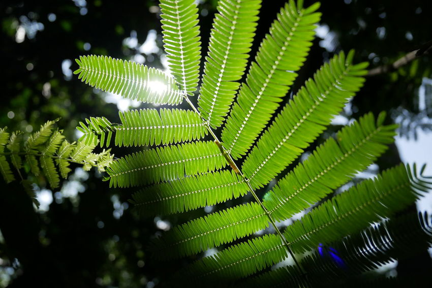 Abstract Backgrounds Beauty In Nature Close-up Day Fern Focus On Foreground Fragility Green Color Growth Leaf Leaves Natural Pattern Nature No People Outdoors Pattern Plant Plant Part Selective Focus Tranquility Tree Vulnerability