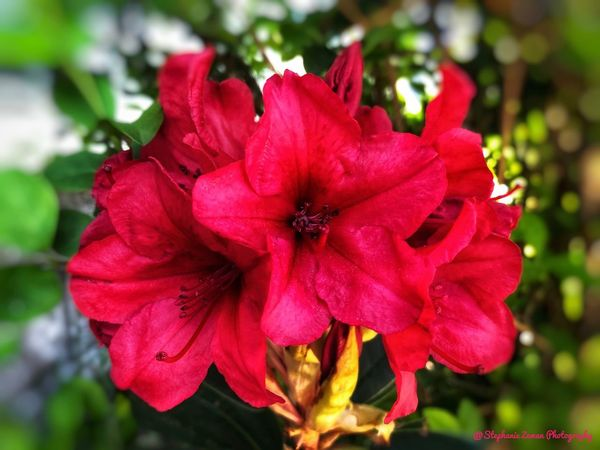 Pretty in Red Flowering Plant Flower Plant Beauty In Nature Petal Fragility Vulnerability  Flower Head Freshness Growth Close-up Red Focus On Foreground Nature No People Day Outdoors