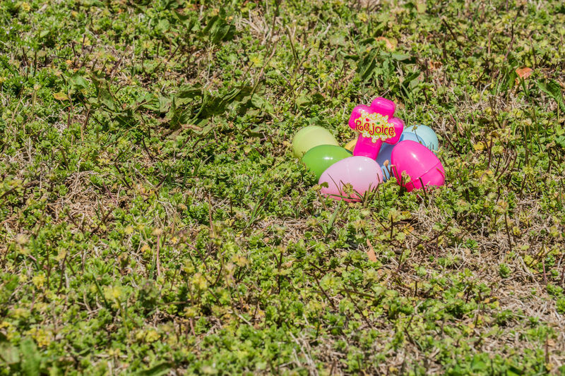 Close-up Day Easter Easter Egg Hunt Easter Eggs Easter Eggs On Display Easter Ready Eastereggs God Grass Green Color High Angle View Multi Colored Nature No People Outdoors Pink Color Trust