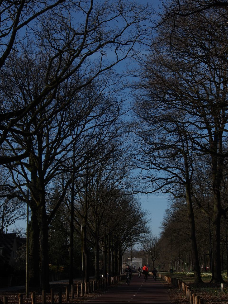 VIEW OF TREES IN CITY