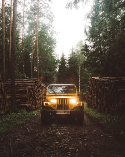 Tree Transportation Forest Land Vehicle No People Day Outdoors Growth Nature Sky