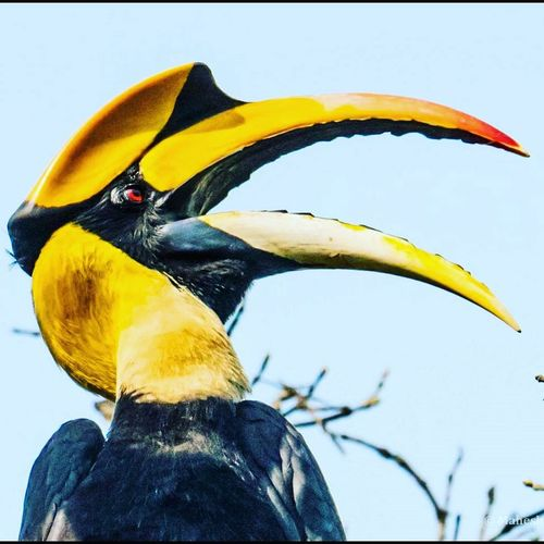 One more portrait of the GREAT HORNBILL Ornithology  Nature_collection Landscape_collection EyeEmNatureLover Nature Photography Bestoftheday Best EyeEm Shot Bestbirdsshot Bestbirdphotos Hornbills Russian Travel Blog Travel Photography Wildlife & Nature Close-up Bird Tracks Bird Themes Birdfreaks Birds Of EyeEm  Birdwatching Birds_collection Bird Photography Bird Theme Beauty In Nature Birdstagram Nature_collection Beautiful Birds Wild Life Photo Birds