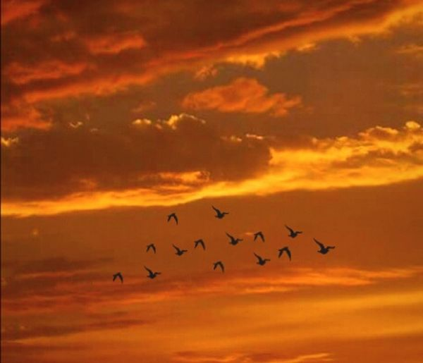Bird Sunset Flying Animals In The Wild Animal Wildlife Large Group Of Animals Flock Of Birds Animal Themes Silhouette Cloud - Sky Sky Romantic Sky Heavens Final Frontier Here To Eternity Original Experiences Buy Me EyeEm Gallery Streemzoofamily Getty Images Eyeem Market Tadaa Community Golden Moments  Silent Moment Outdoors Long Goodbye EyeEm Diversity Resist The Secret Spaces EyeEmNewHere Art Is Everywhere The Architect - 2017 EyeEm Awards The Portraitist - 2017 EyeEm Awards The Photojournalist - 2017 EyeEm Awards The Great Outdoors - 2017 EyeEm Awards The Street Photographer - 2017 EyeEm Awards Break The Mold
