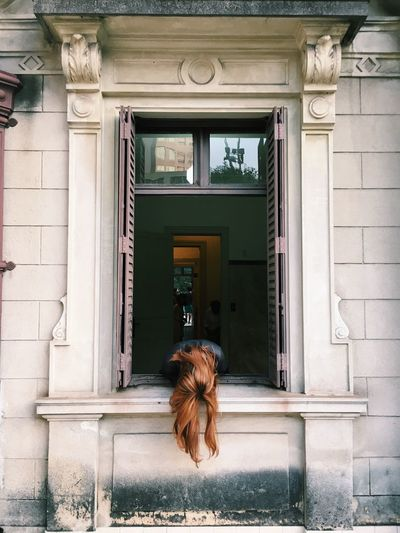 Dog on window of building